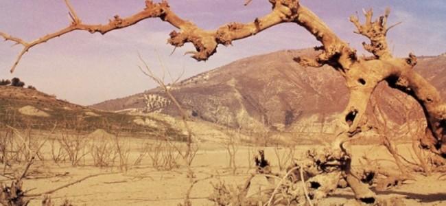 image-19802